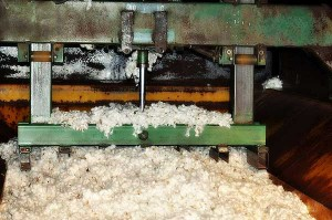 cotton-zavod
