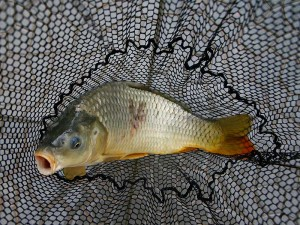 ryba1