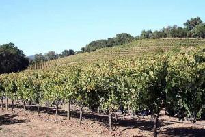 vinogradnik