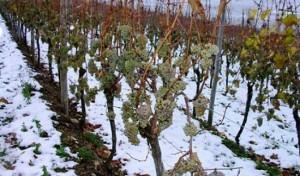 vinogradzimoy